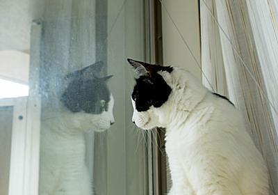 猫用のハンモックを買った話 - ぶち猫おかわり