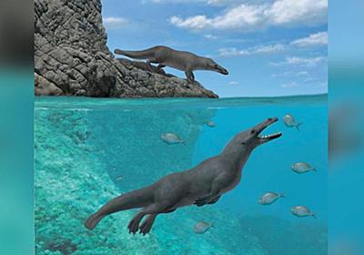 CNN.co.jp : 太古のクジラ、4本足だった 南米で初の発見