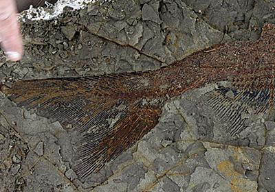 6600万年前に小惑星が地球に衝突し恐竜が絶滅した際の化石が発見される - GIGAZINE