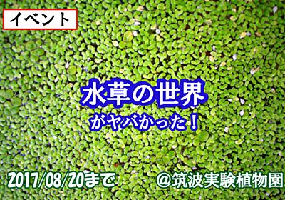【8/20まで!】こんな水草見たことねぇ!!植物園で大人気イベントの水草展に水草の変態とログインしてきた!【水草展】 - 勝手につくば大使