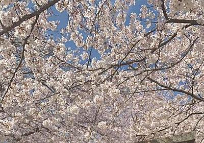 【神社】夕月神社の桜|カメラとおでかけ
