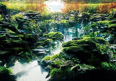 """室内に自然を持ち込む、""""世界の見え方まで変わる""""美しき水草水槽の奥深い世界 - それどこ"""
