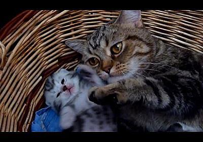 猫が教えてくれる、ハッピーな子育てのための10の秘訣 - ガベージニュース