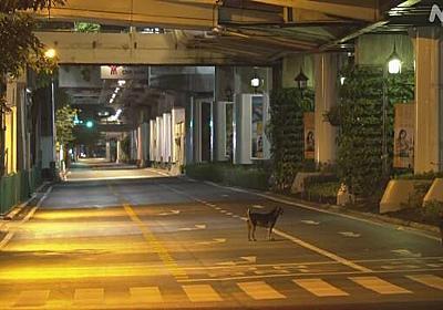 タイ 新型コロナ感染者 初の1万人超 移動制限など規制強化へ | 新型コロナウイルス | NHKニュース