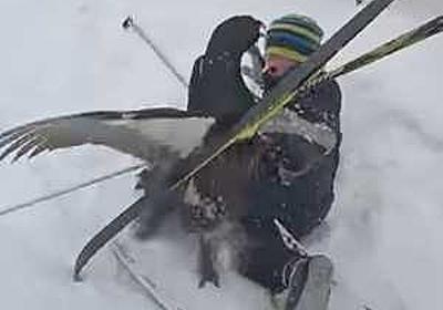 スキー中に出現したヨーロッパオオライチョウに襲われてしまうノルウェー人親子の危機一髪映像!! | コモンポストムービー