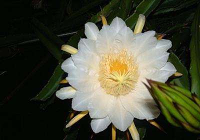 月下で咲く白い花 - 【台中生活】台湾在住者が語る台湾の真実