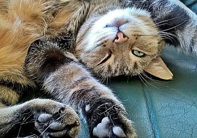 猫が飼い主にお腹を見せるのはなぜ?動物行動学者たちの答え : カラパイア