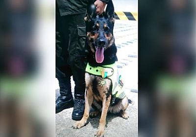 CNN.co.jp : 麻薬探知犬の首に700万円の「懸賞金」、犯罪組織が発表 コロンビア