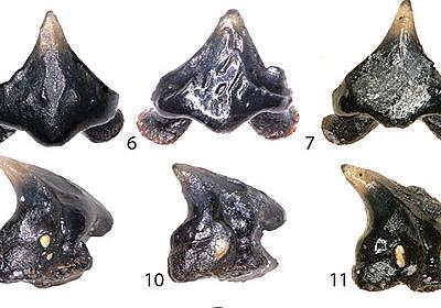 新種の古代サメ「ギャラガドン」と名付けられる。『ギャラガ』の自機によく似た歯を持っていたため