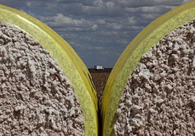 焦点:貿易戦争が招いたブラジル農業ブーム、米アイオワと明暗 | ロイター