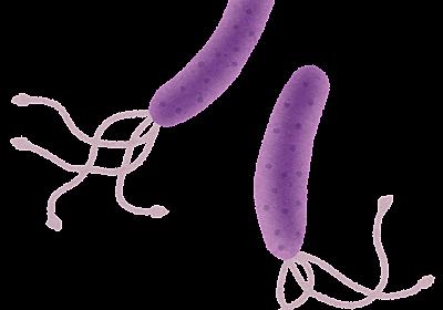 名前だけは可愛い「ピロリ菌」 - 人間ドック解体新書