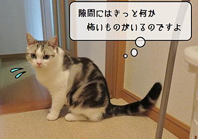 猫雑記 ~隙間が気になる~ - 猫と雀と熱帯魚