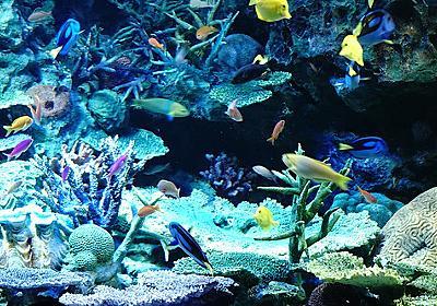 【サンシャイン水族館】α6500+SEL18135の練習も兼ねて水族館を堪能してきた  |  星空と虹の橋のあしあと