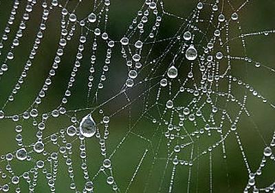 カーボンナノチューブ入りの水を吹きかけられたクモが地球上最高強度のクモの糸を生成 - GIGAZINE