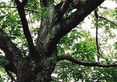 このー木なんの木、気になる木ー - 自然の生命 空を見上げて