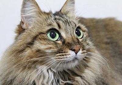 こんな人で、私は在りたい。 - キジトラ猫の物語   ~姉妹ニャンコの、佐世保弁、ときどき、博多弁~