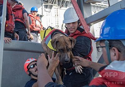 太平洋で漂流5か月、米国人女性2人と愛犬2匹を救助 写真5枚 国際ニュース:AFPBB News