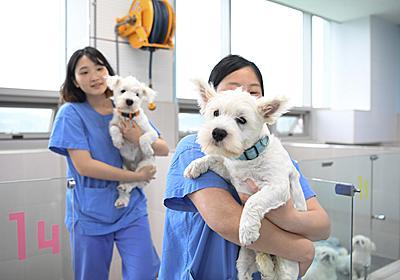 死んだペットが10万ドルでよみがえる(文字どおり) クローン犬誕生の現場に立ち会った【動画あり】:朝日新聞GLOBE+