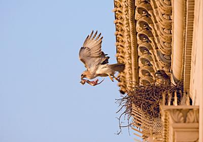 新型コロナのロックダウンで都市の鳥が増えていた、大規模調査