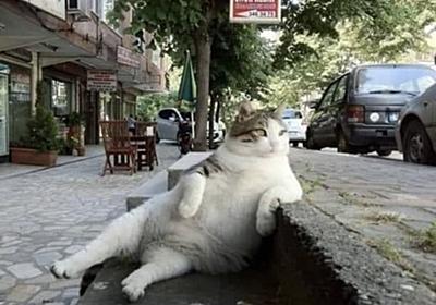 """最多情報局 on Twitter: """"トルコの店前の階段で毎日のように同じポーズを取っていた猫、亡くなった後同じ場所に記念碑が建てられ話題に https://t.co/xog1zXLQAr"""""""