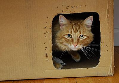 シュレーディンガーの猫、救われる | ギズモード・ジャパン