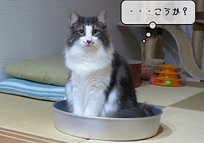 猫の道具 ~ひんやりアルミ缶鍋の活用~ - 猫と雀と熱帯魚