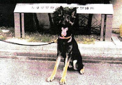 捜索中に逃走した警察犬、2日ぶりに保護 兵庫の山中:朝日新聞デジタル
