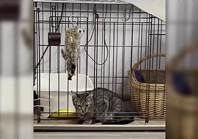 まさに「猫は液体」!ケージに入れられた猫さんの脱出シーンが衝撃的だった「頭が入れば通るって本当だったんだな」