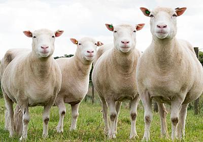 クローン羊は、いまでも元気に生きている WIRED.jp
