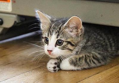 「猫の世話は自分でしなさい!」エクアドルがウィキリークス創始者ジュリアン・アサンジを叱った | ギズモード・ジャパン