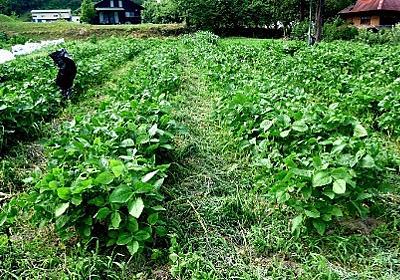 メルカリで枝豆を売る - 寝太郎ブログ
