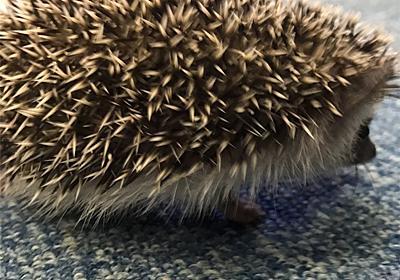祝🎉お迎え1周年 〜ウィニーとの出会い✨ - Winnie-the-Hedgehog