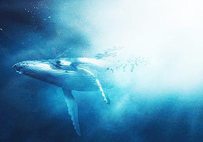 「クジラの言葉を理解するための研究」では一体何が行われているのか? - GIGAZINE