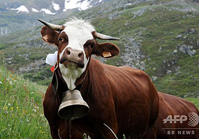 牛の首から鈴消える、計13個窃盗被害 オーストリア 写真1枚 国際ニュース:AFPBB News