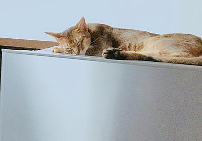 猫と冷蔵庫 - 55歳のDiary