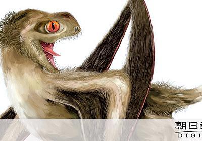 爬虫類の翼竜にもフサフサの羽毛 中国で化石見つかる:朝日新聞デジタル