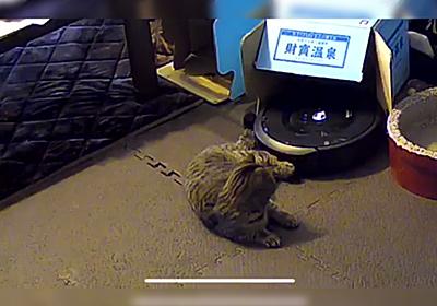 ルンバ『動けません><』カメラで確認したら猫さんがこれ「猫パンチかと思いきや寝技」 - Togetter