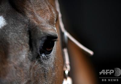馬を生きたまま切断、体の一部が消える… 仏で謎の事件相次ぐ 写真3枚 国際ニュース:AFPBB News