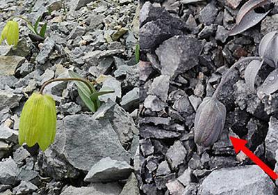 人間から採取されにくく進化した植物がいるという報告 - GIGAZINE