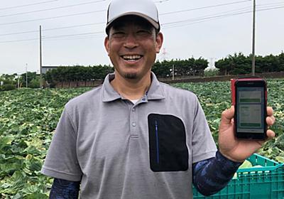 野菜の出荷をLINEで連絡 電話やファクスは「卒業」: 日本経済新聞