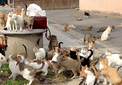 北九州「猫の島」謎の猫急減 5年で3分の1 毒殺?刑事告発検討 - 毎日新聞