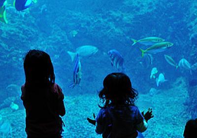 """夜の水族館、マニアックな京都観光――いつもと違う""""お出かけ""""を楽しもう - はてなニュース"""