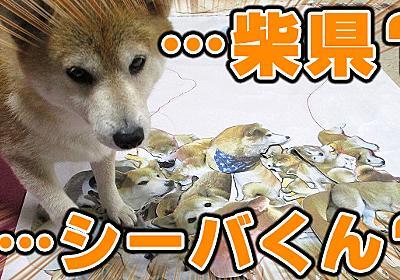 もう千葉県は柴県(柴犬)でいいんじゃないか :: デイリーポータルZ