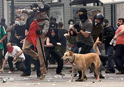 アテネに現れる「反逆の犬」。その名はしなもん!? - 蟹亭奇譚