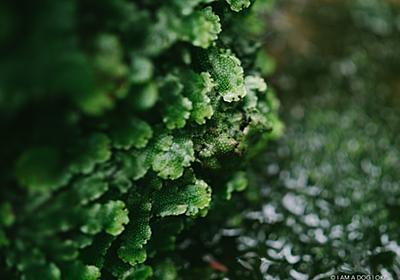 国分寺崖線上の名勝「殿ヶ谷戸庭園」をカメラ散歩しつつM. ZUIKO 17mm F1.2 PROとSUMMILUX 15mm F1.7の撮り比べ - I AM A DOG