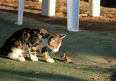 ネズミの大増殖を止めるため、猫1000匹以上が市内に放たれる(アメリカ・シカゴ) : カラパイア