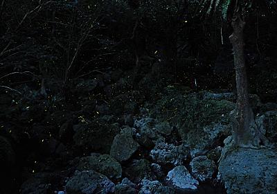 【2019年版】那覇のジャングル!末吉公園ではホタルが見頃