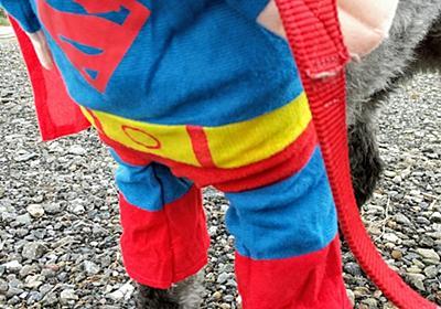 ハロウィン仮装スーパーマンパステルくんですo(U・ω・)⊃ - ちまりんのゆるい日常
