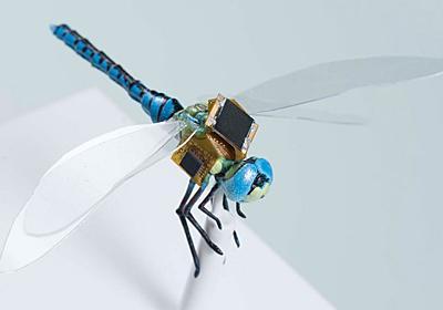 【やじうまPC Watch】生きたトンボをドローンに変える「DragonflEye」 ~光刺激でトンボを制御 - PC Watch