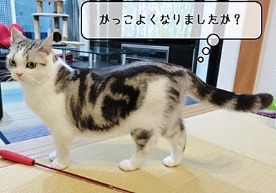 猫雑記 ~2019年11月の猫様体重測定~ - 猫と雀と熱帯魚